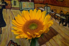 C Vincent Ferguson - Sunflower in Pool Hall - Digital Image